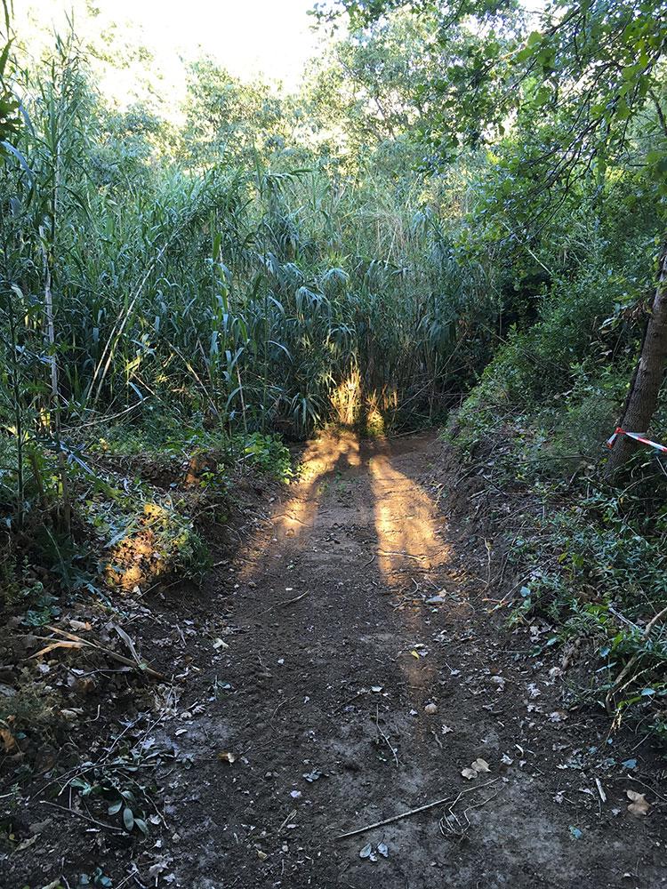 Accès à la jungle